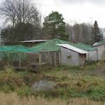 Innhengning hvor fasanene og rapphønsene holdt hus
